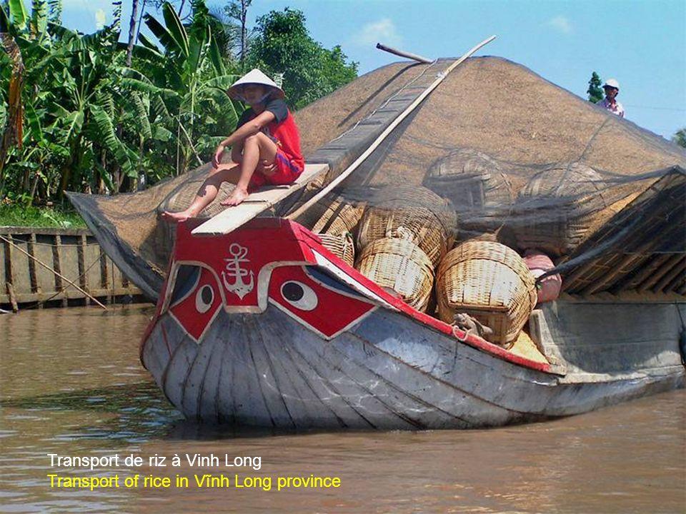 Transport de ramboutans dans le delta est un fruit tropical d'Asie Transport of rambutans, a tropical fruit of Asia, in the Mekong delta