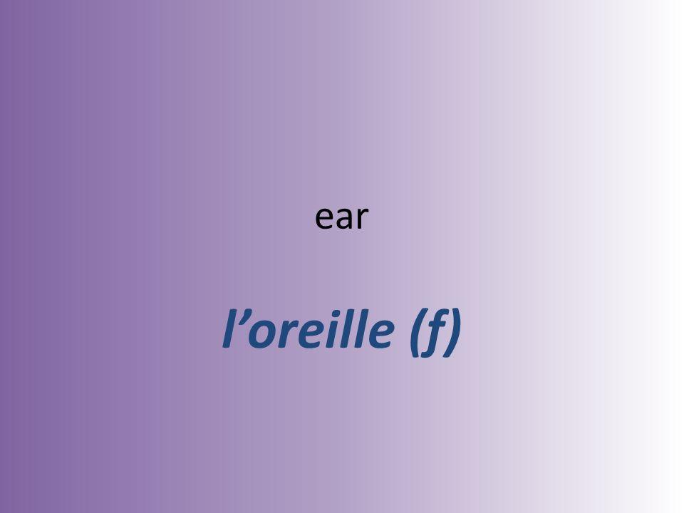 ear loreille (f)