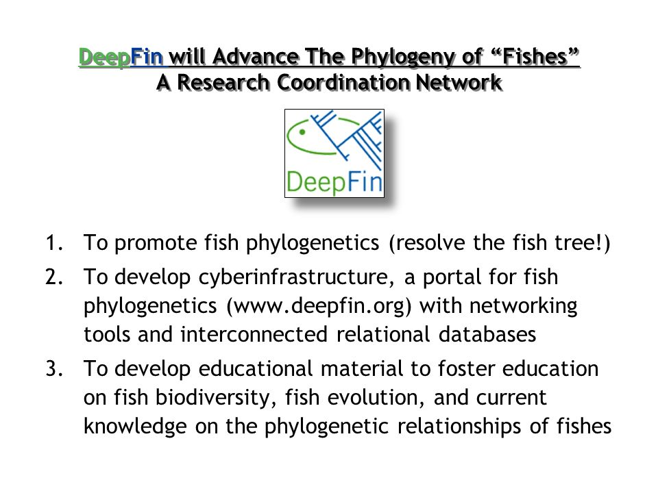 DeepFin will Advance The Phylogeny of Fishes A Research Coordination Network 1.To promote fish phylogenetics (resolve the fish tree!) 2.To develop cyberinfrastructure, a portal for fish phylogenetics (www.deepfin.org) with networking tools and interconnected relational databases 3.To develop educational material to foster education on fish biodiversity, fish evolution, and current knowledge on the phylogenetic relationships of fishes