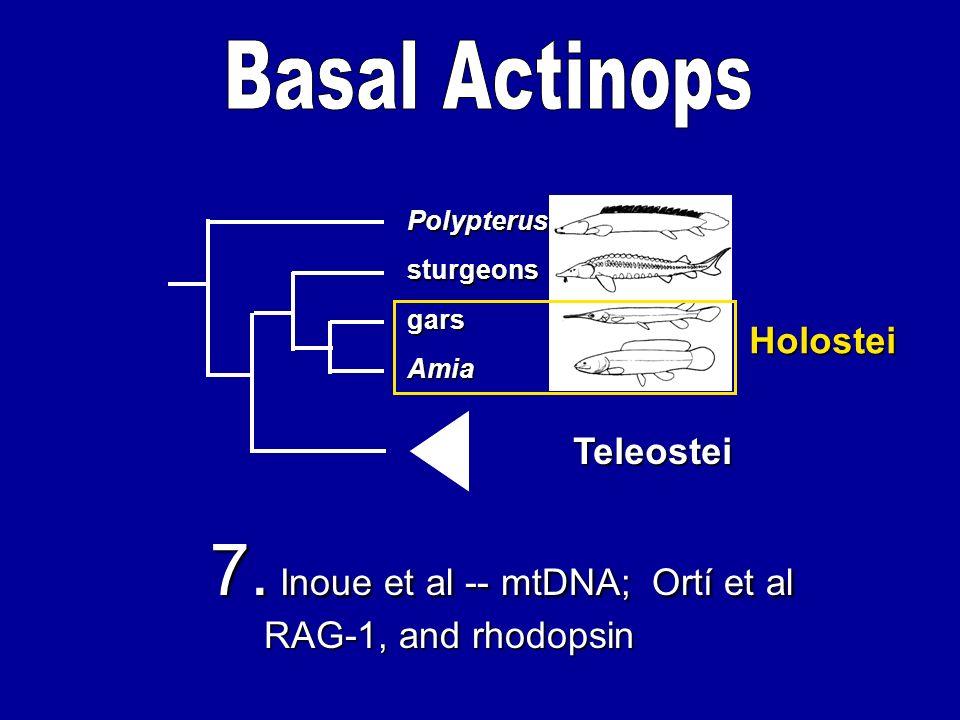 Amia gars sturgeons Polypterus Teleostei Holostei 7. Inoue et al -- mtDNA; Ortí et al RAG-1, and rhodopsin
