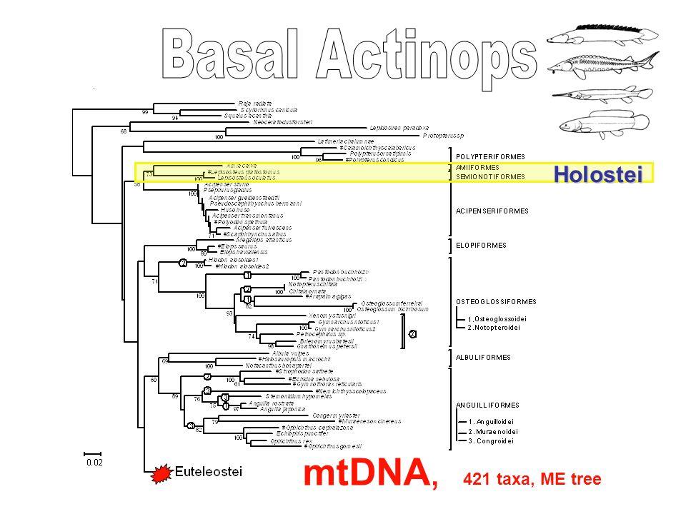 Holostei mtDNA, 421 taxa, ME tree