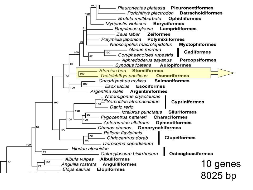 10 genes 8025 bp