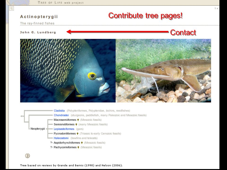 Contribute tree pages! Contact