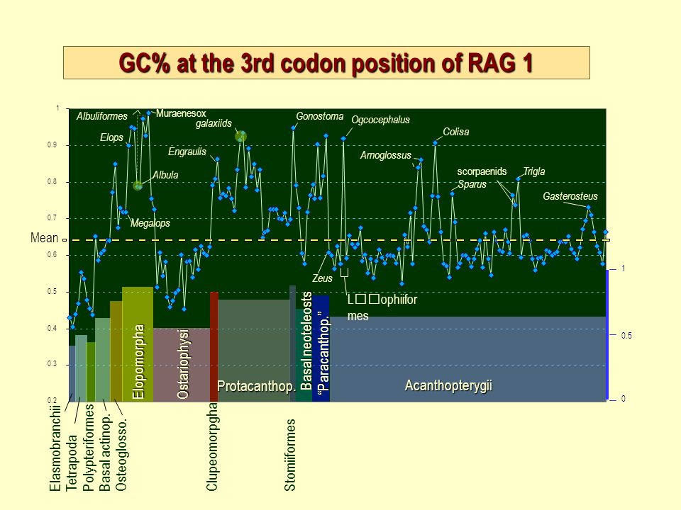 GC% at the 3rd codon position of RAG 1 Mean 0.5 1 ElasmobranchiiTetrapodaPolypteriformesBasal actinop.Osteoglosso.