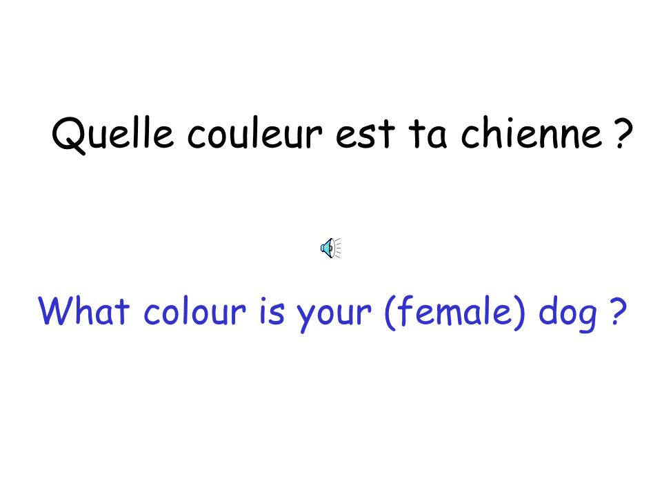 Quelle couleur sont tes chats What colour are your (male) cats