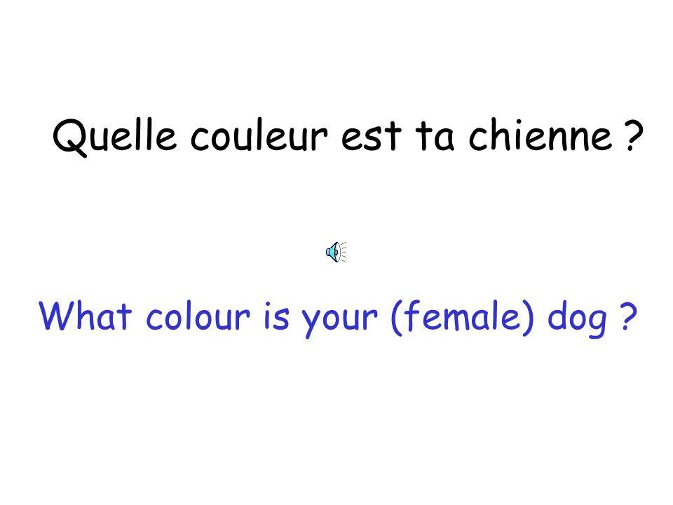 Quelle couleur sont tes chats? What colour are your (male) cats ?