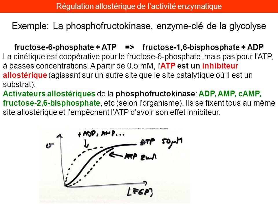Exemple: La phosphofructokinase, enzyme-clé de la glycolyse fructose-6-phosphate + ATP => fructose-1,6-bisphosphate + ADP La cinétique est coopérative