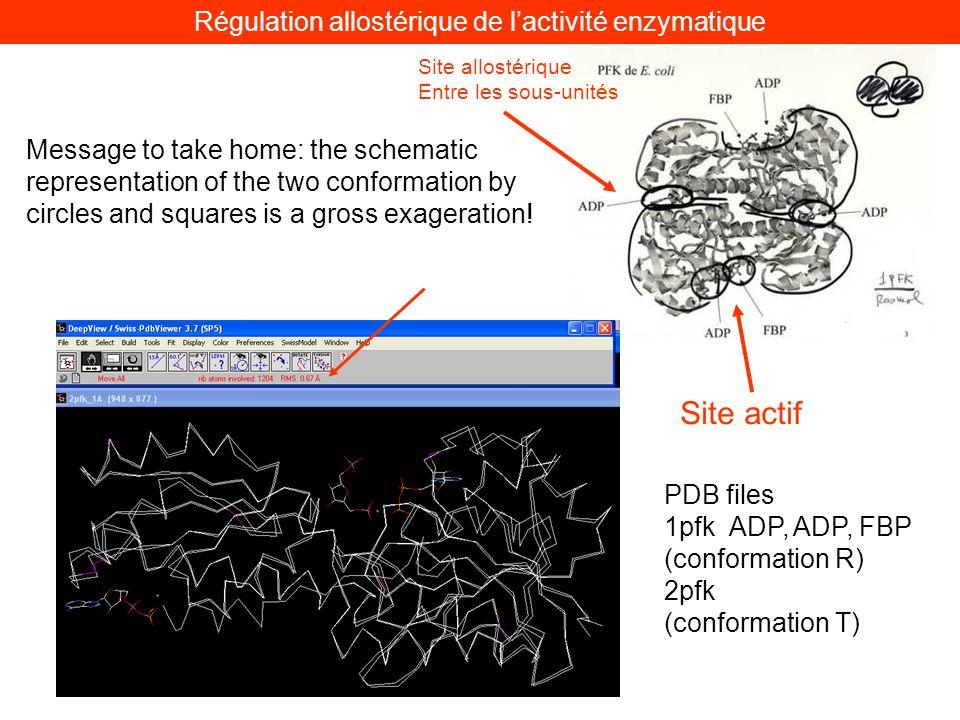 Site actif Site allostérique Entre les sous-unités Régulation allostérique de lactivité enzymatique Message to take home: the schematic representation