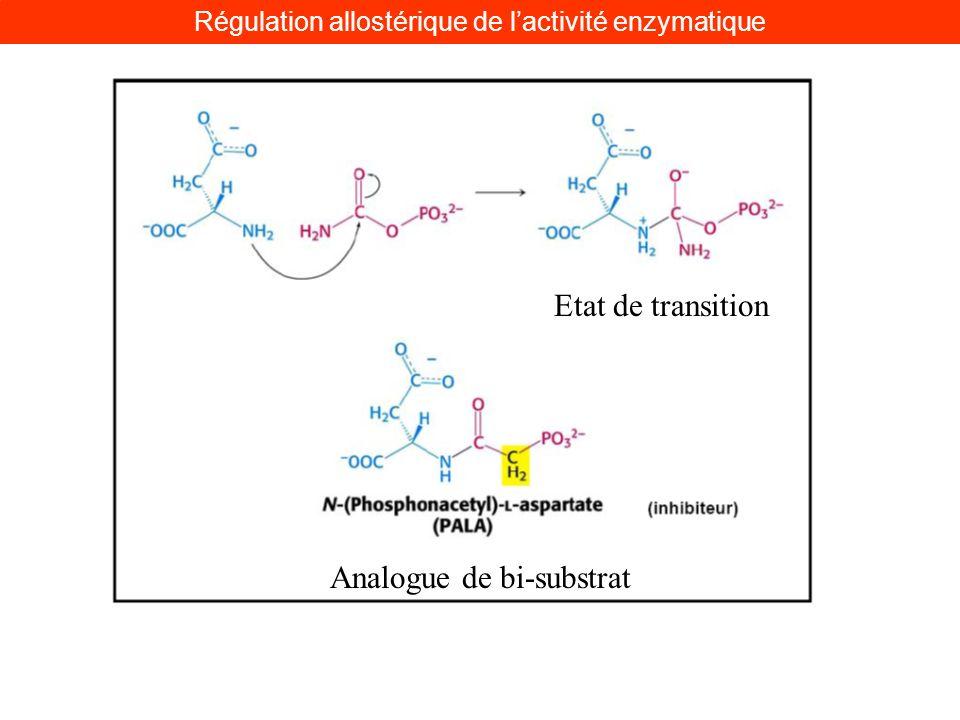 Etat de transition Analogue de bi-substrat Régulation allostérique de lactivité enzymatique