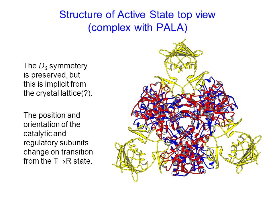Structure of Active State top view (complex with PALA) The D 3 symmetery is preserved, but this is implicit from the crystal lattice(?). The position