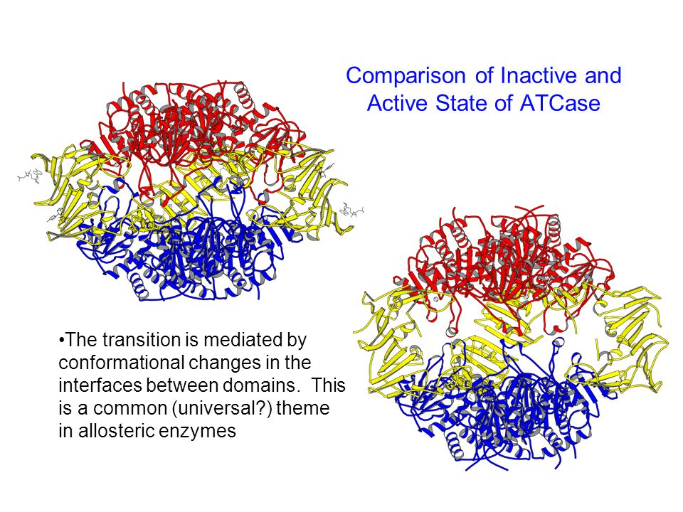 Comparison of Inactive and Active State of ATCase The transition is mediated by conformational changes in the interfaces between domains. This is a co