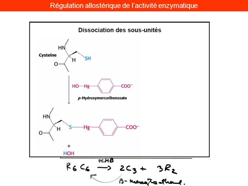 Régulation allostérique de lactivité enzymatique