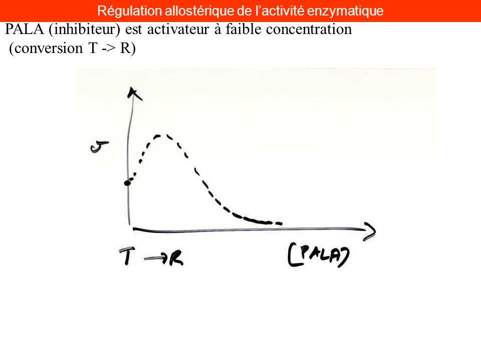 PALA (inhibiteur) est activateur à faible concentration (conversion T -> R) Régulation allostérique de lactivité enzymatique