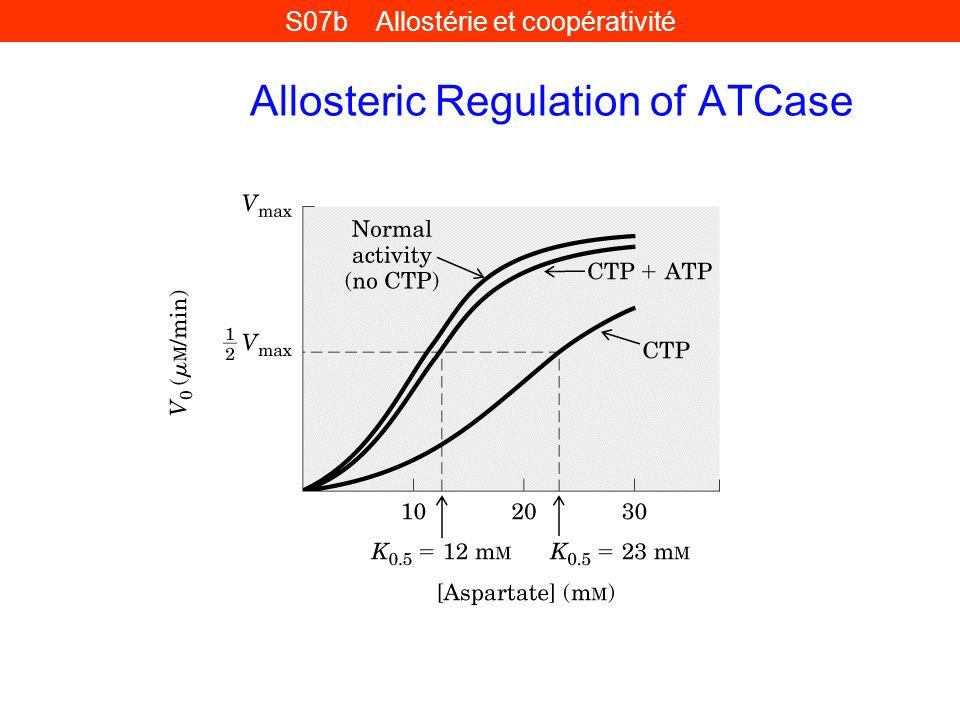 Allosteric Regulation of ATCase S07b Allostérie et coopérativité