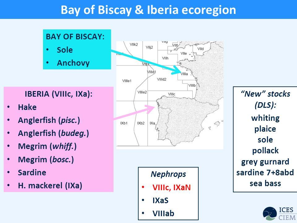 Bay of Biscay & Iberia ecoregion IBERIA (VIIIc, IXa): Hake Anglerfish (pisc.) Anglerfish (budeg.) Megrim (whiff.) Megrim (bosc.) Sardine H.