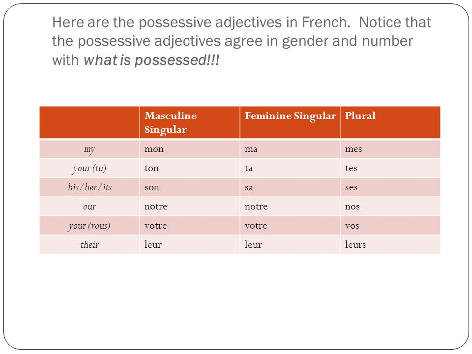 Here are the possessive adjectives in French.