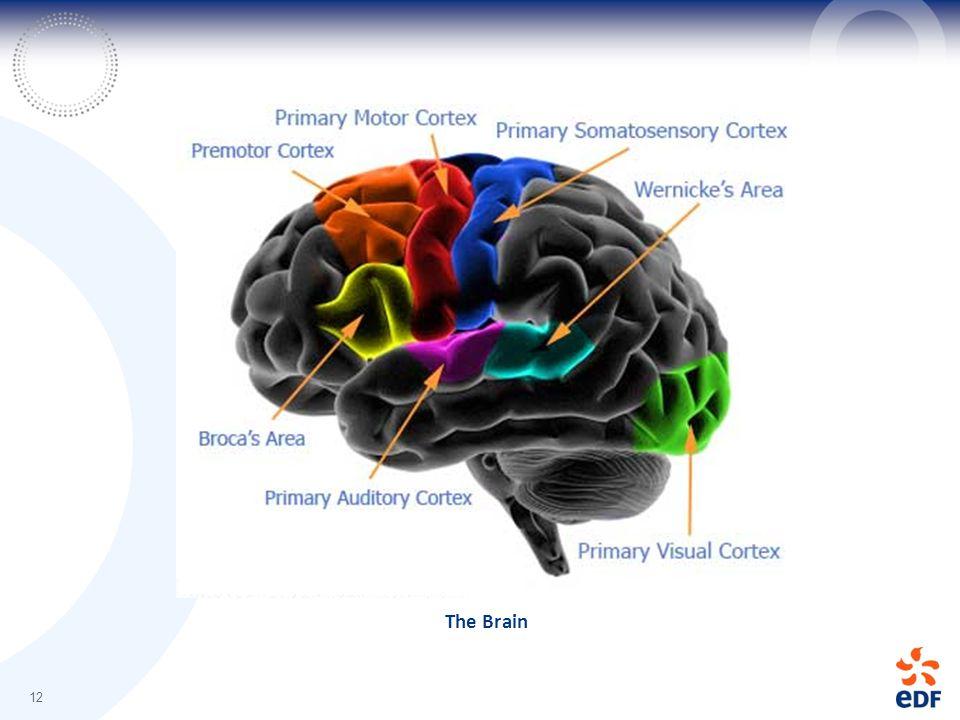 The Brain 12