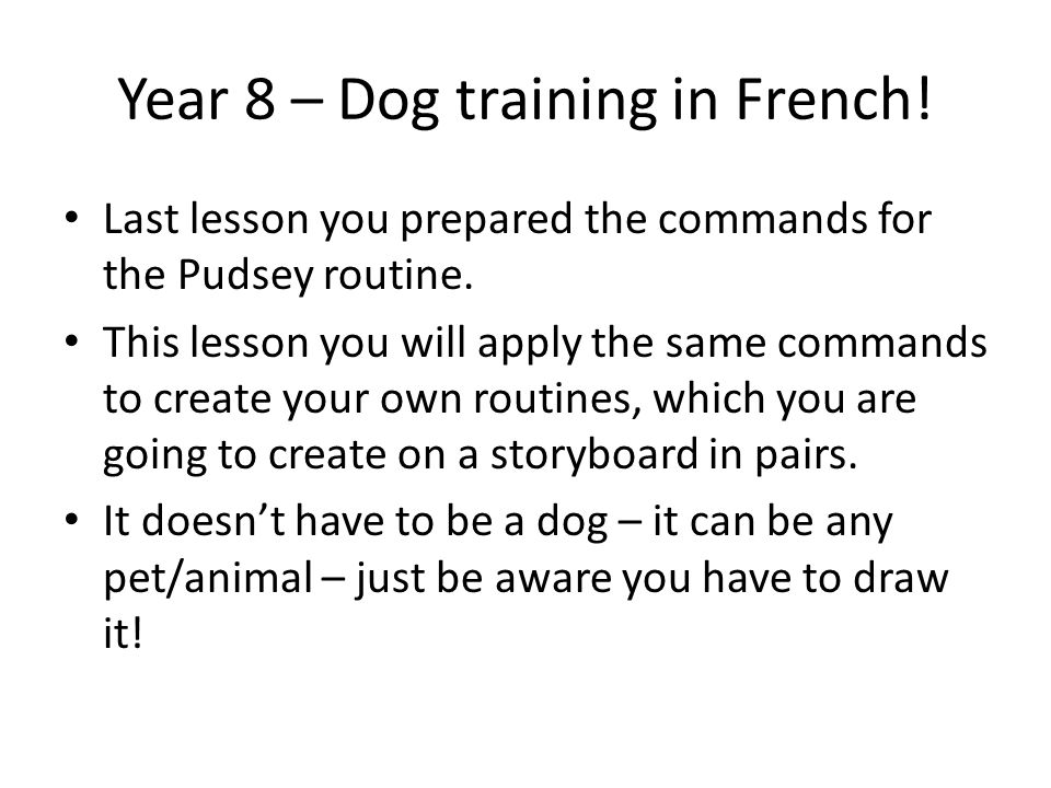 Year 8 – Dog training in French.Last lesson you prepared the commands for the Pudsey routine.
