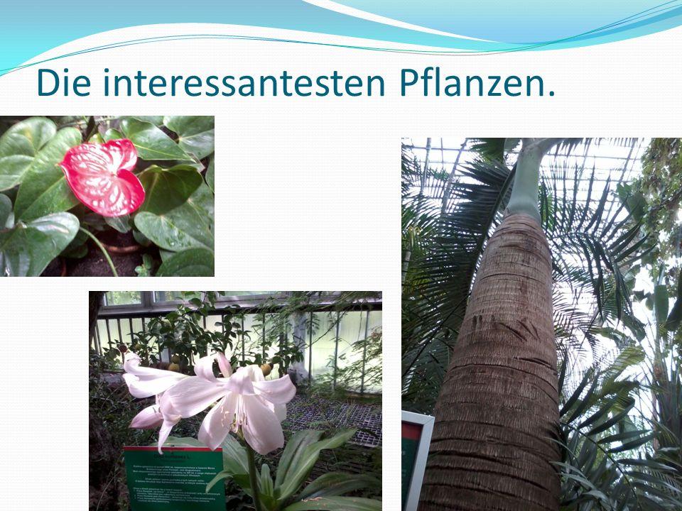 Die interessantesten Pflanzen.