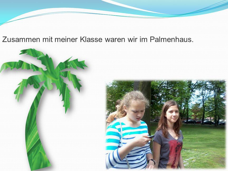 Zusammen mit meiner Klasse waren wir im Palmenhaus.