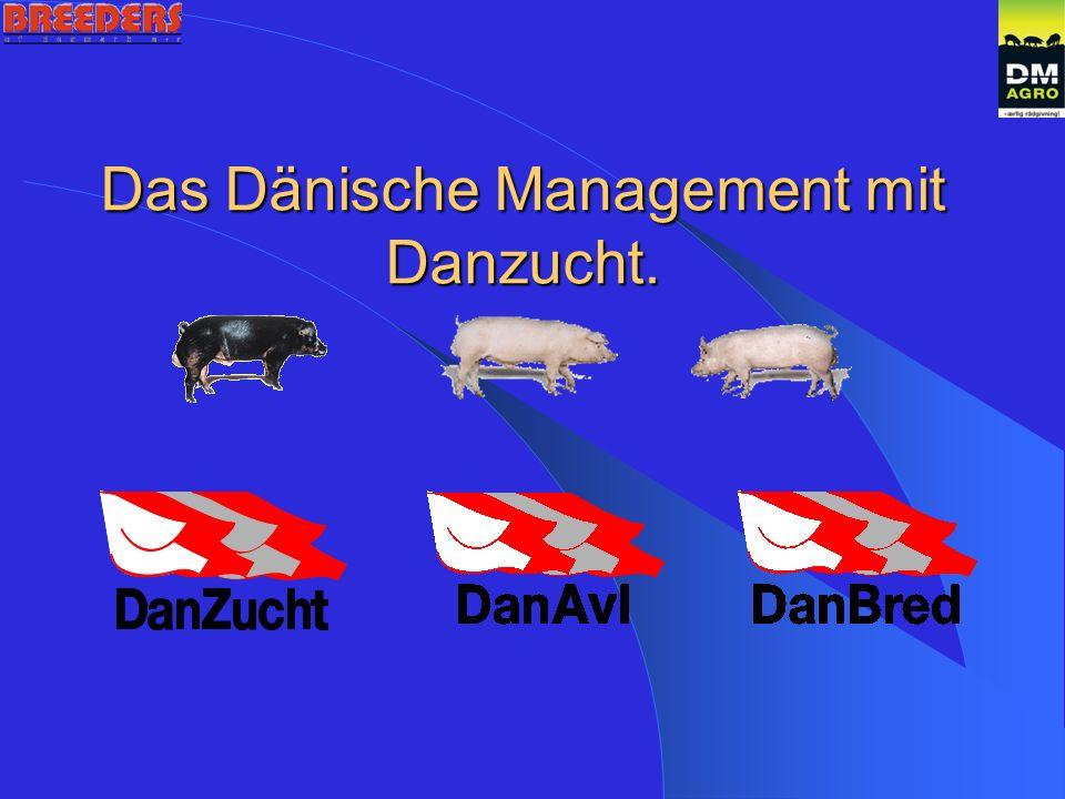 Das Dänische Management mit Danzucht.