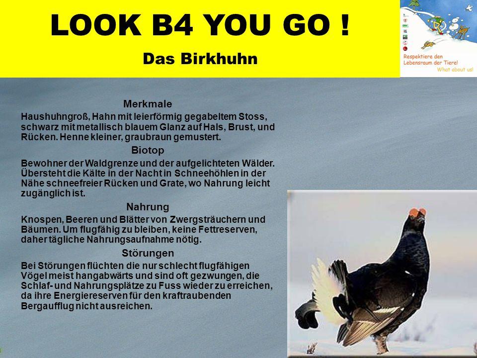 Birkhuhn Merkmale Haushuhngroß, Hahn mit leierförmig gegabeltem Stoss, schwarz mit metallisch blauem Glanz auf Hals, Brust, und Rücken.