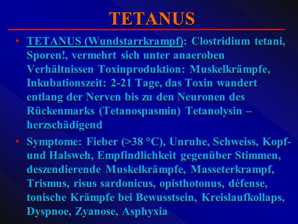 TETANUS (Wundstarrkrampf): Clostridium tetani, Sporen!, vermehrt sich unter anaeroben Verhältnissen Toxinproduktion: Muskelkrämpfe, Inkubationszeit: 2