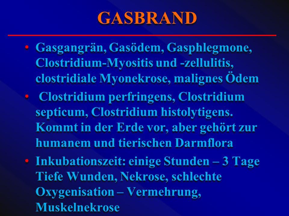 Gasgangrän, Gasödem, Gasphlegmone, Clostridium-Myositis und -zellulitis, clostridiale Myonekrose, malignes Ödem Clostridium perfringens, Clostridium s