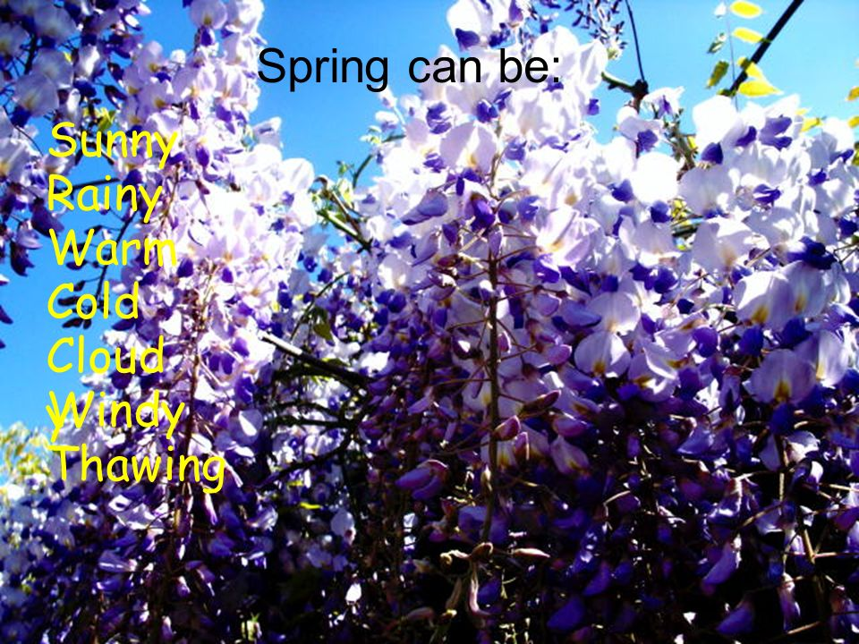 Spring is one of the four temperate seasons Spring marks the transition from winter into summer