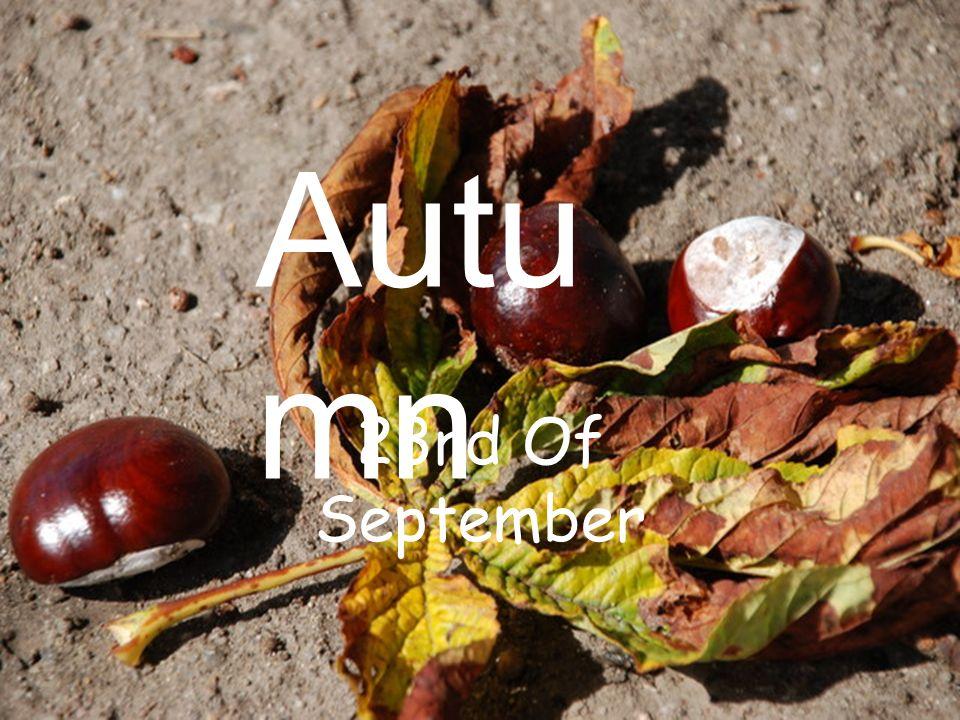Autumn can be: Rainy Freezing Cloudy Windy Foggy Sunny