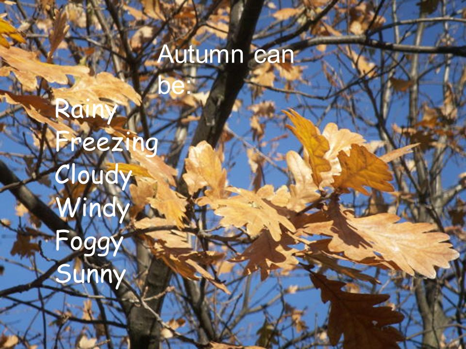 Autumn can be: Rainy Freezing Cloudy Windy Foggy Sunny