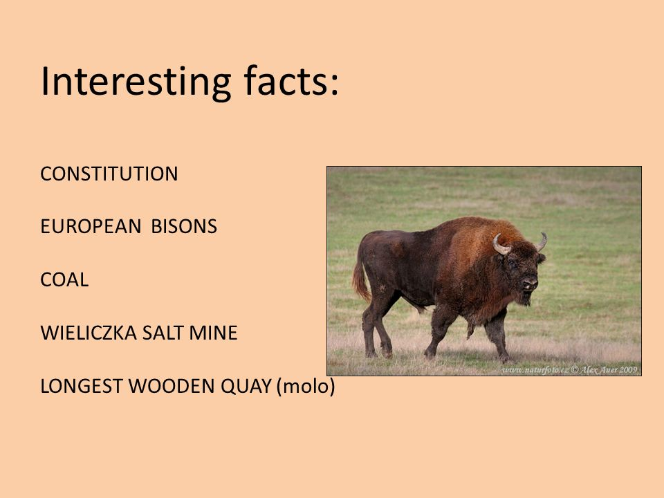Interesting facts: CONSTITUTION EUROPEAN BISONS COAL WIELICZKA SALT MINE LONGEST WOODEN QUAY (molo)