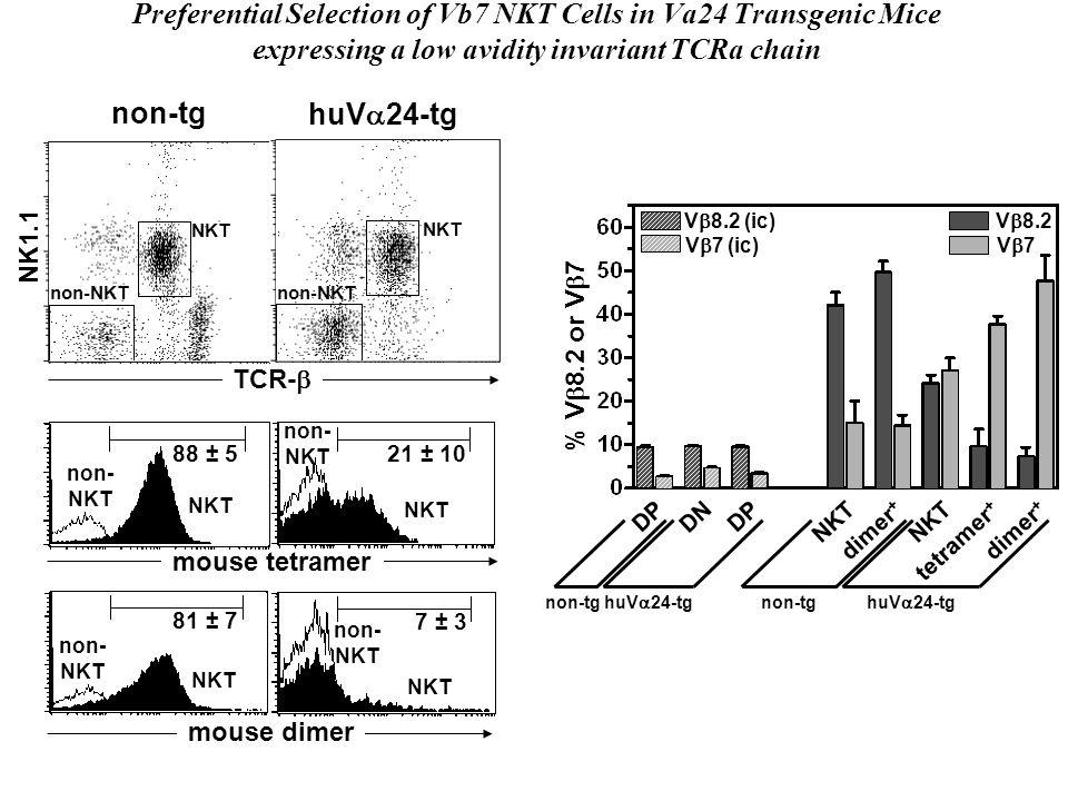 TCR- mouse dimer mouse tetramer TCR- NK1.1 non-tg huV 24-tg NKT non-NKT NKT non-NKT NKT non- NKT 88 ± 5 non- NKT 21 ± 10 NKT non- NKT 81 ± 7 NKT non-