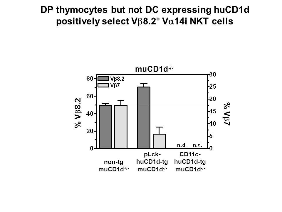 muCD1d -/- % V 8.2 % V 7 non-tg muCD1d +/- pLck- huCD1d-tg muCD1d -/- CD11c- huCD1d-tg muCD1d -/- DP thymocytes but not DC expressing huCD1d positivel