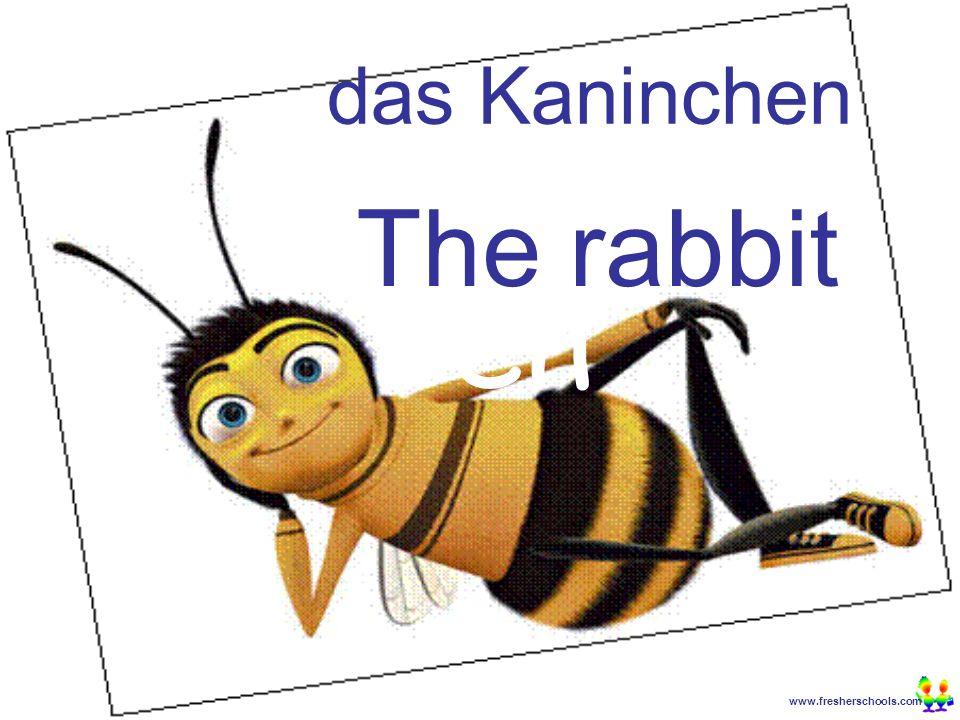 www.fresherschools.com Ben das Kaninchen The rabbit