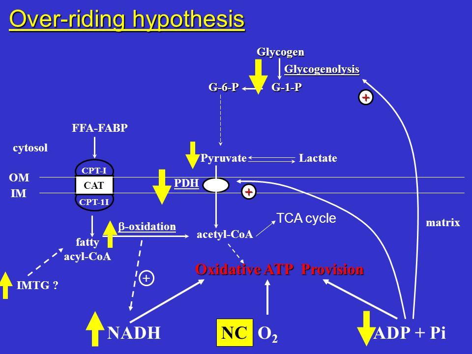 cytosol FFA-FABP PyruvateLactate CAT CPT-I CPT-1I PDH fatty acyl-CoA acetyl-CoA -oxidation OM IM matrix Oxidative ATP Provision NADH O 2 ADP + Pi + Ov