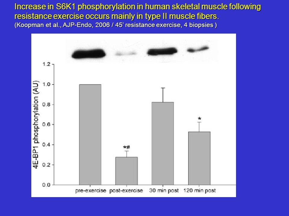 Increase in S6K1 phosphorylation in human skeletal muscle following resistance exercise occurs mainly in type II muscle fibers. (Koopman et al., AJP-E
