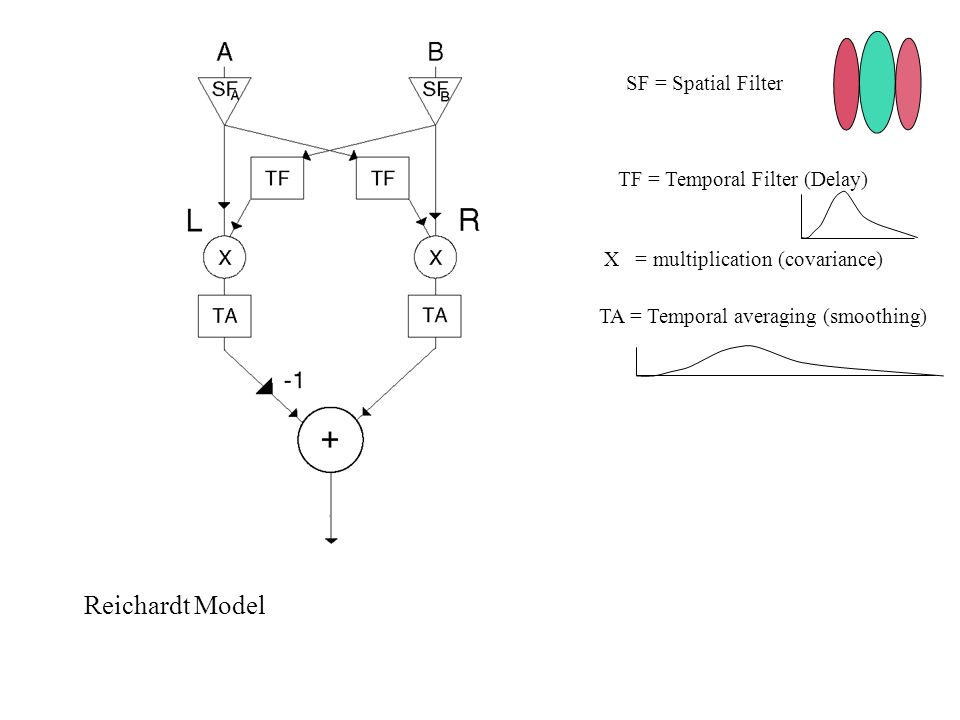 Reichardt Model SF = Spatial Filter TF = Temporal Filter (Delay) TA = Temporal averaging (smoothing) X = multiplication (covariance)