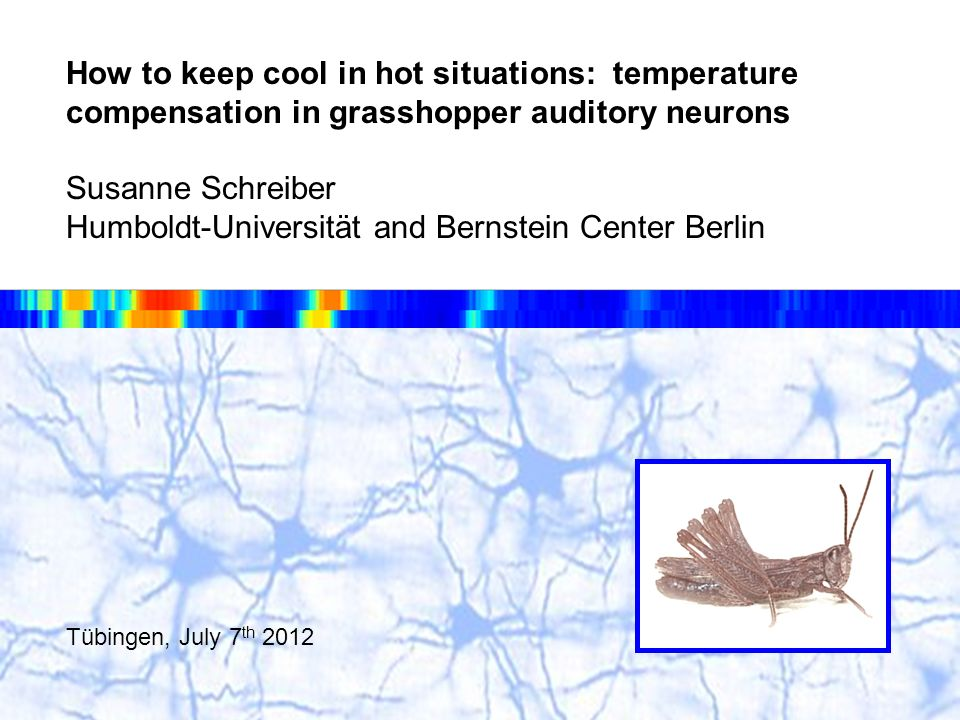 Acoustic communication in grasshoppers Susanne Schreiber, BCCN Berlin