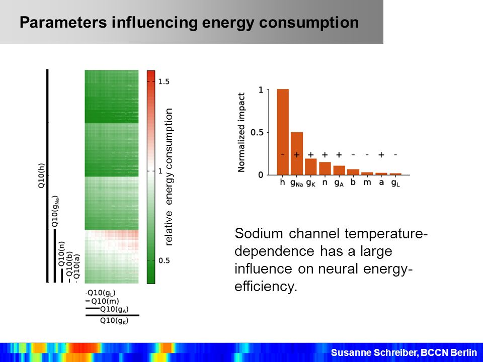 Sodium channel temperature- dependence has a large influence on neural energy- efficiency. Parameters influencing energy consumption Susanne Schreiber
