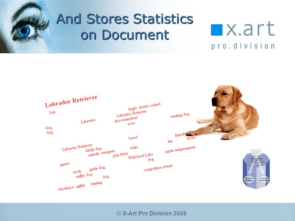 © X-Art Pro Division 2006 And Stores Statistics on Document