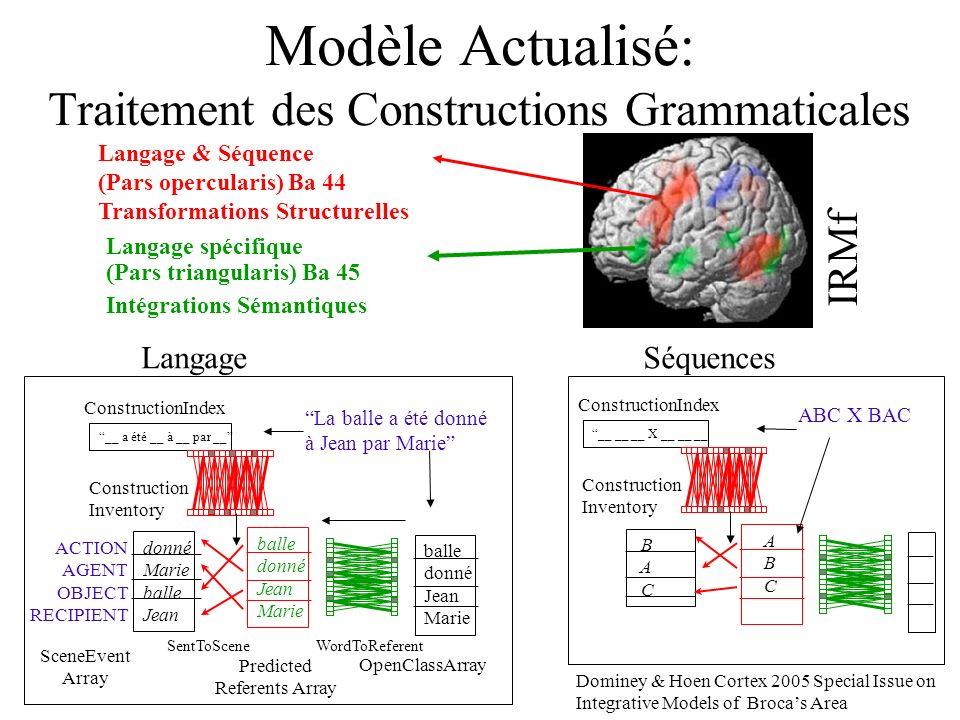 Modèle Actualisé: Traitement des Constructions Grammaticales IRMf donné Marie balle Jean ACTION AGENT OBJECT RECIPIENT __ a été __ à __ par __ balle donné Jean Marie balle donné Jean Marie La balle a été donné à Jean par Marie OpenClassArray Predicted Referents Array SceneEvent Array ConstructionIndex Construction Inventory SentToSceneWordToReferent Langage & Séquence (Pars opercularis) Ba 44 Transformations Structurelles Langage spécifique (Pars triangularis) Ba 45 Intégrations Sémantiques B A C __ __ __ X __ __ __ A B C ABC X BAC ConstructionIndex Construction Inventory Dominey & Hoen Cortex 2005 Special Issue on Integrative Models of Brocas Area LangageSéquences