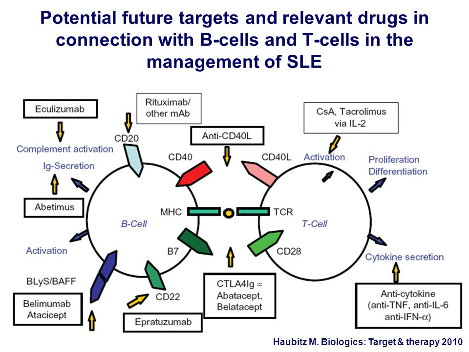 Potential future targets and relevant drugs in connection with B-cells and T-cells in the management of SLE Haubitz M. Biologics: Target & therapy 201
