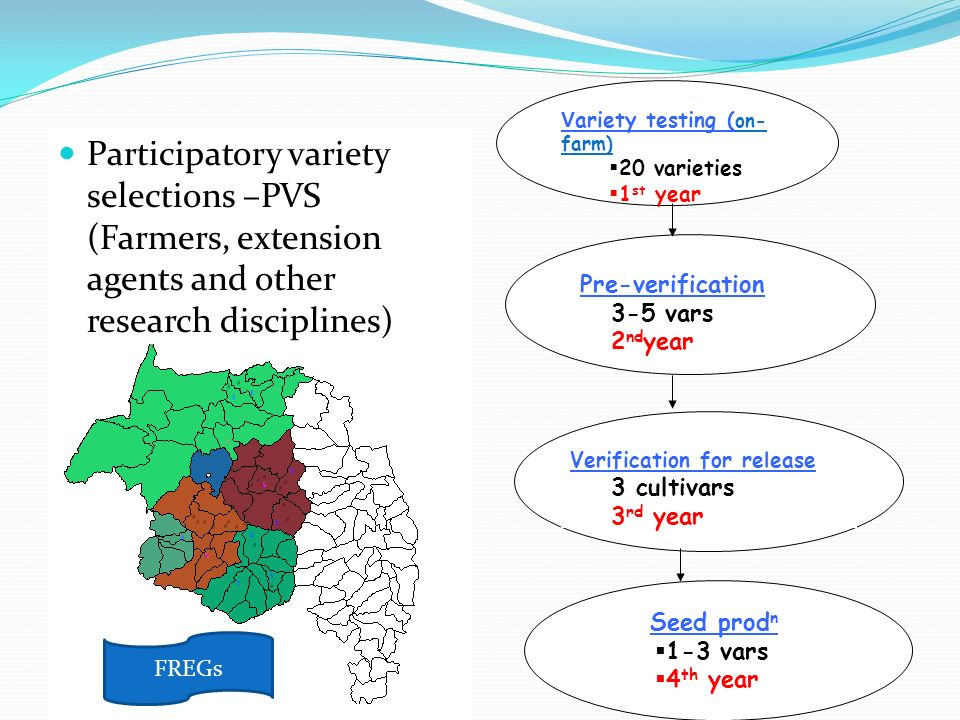 Participatory variety selections –PVS (Farmers, extension agents and other research disciplines) V ariety testing ( on- farm) 20 varieties 1 st year P