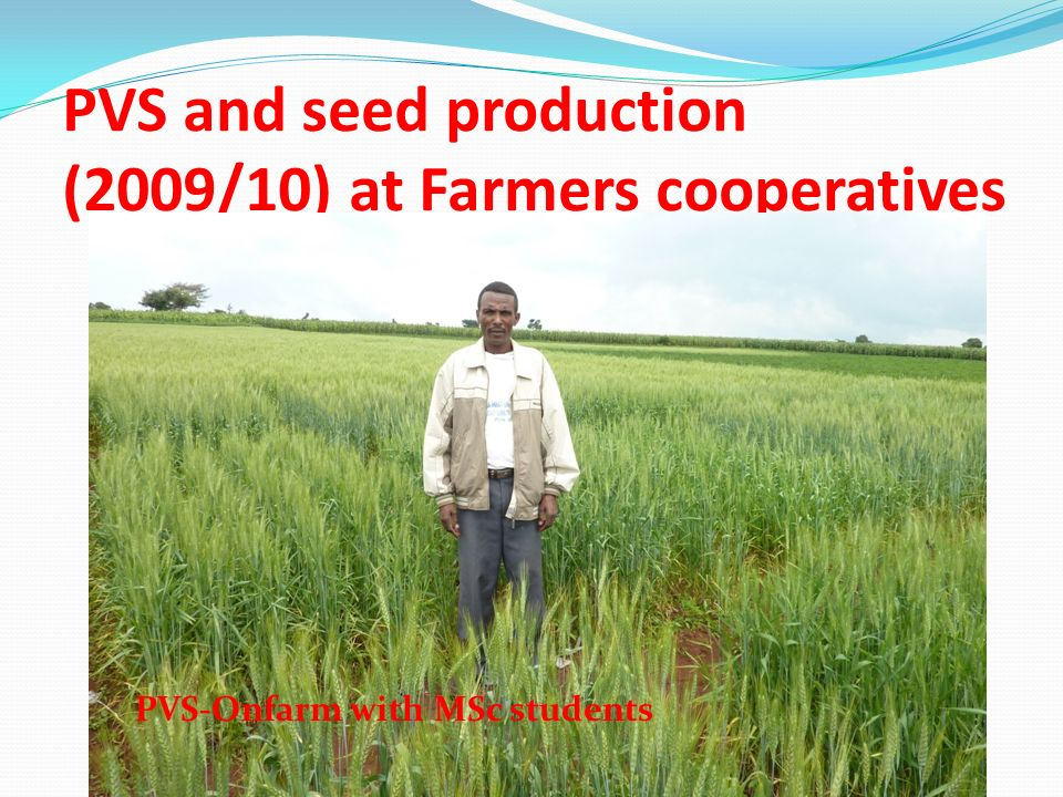 PVS and seed production (2009/10) at Farmers cooperatives PVS-Onfarm with MSc students
