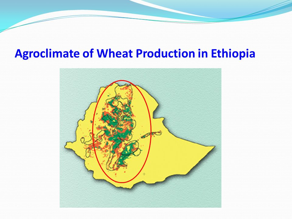 Agroclimate of Wheat Production in Ethiopia