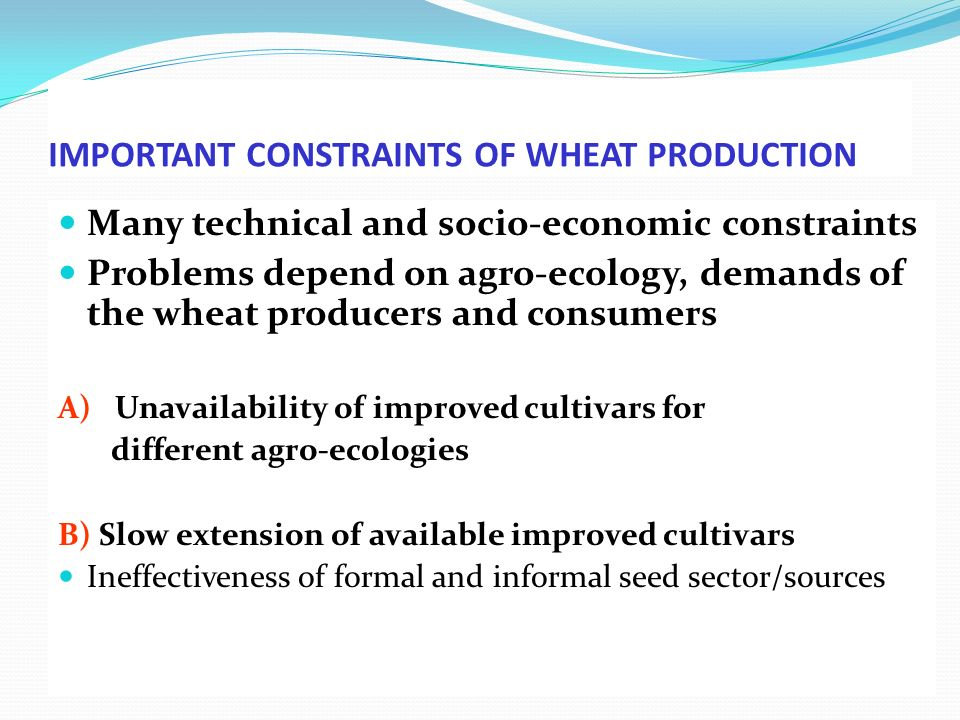 IMPORTANT CONSTRAINTS OF WHEAT PRODUCTION (contd) C) Disease pressure Head scab stem rust Septori a Yellow rust