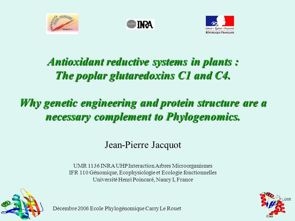 Antioxidant reductive systems in plants : The poplar glutaredoxins C1 and C4. Why genetic engineering and protein structure are a necessary complement