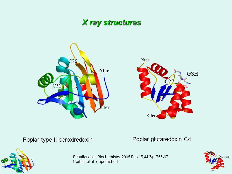 Nter Cter C51 C76 Nter Cter GSH C27 Poplar type II peroxiredoxin Poplar glutaredoxin C4 Echalier et al. Biochemistry. 2005 Feb 15;44(6):1755-67 Corbie