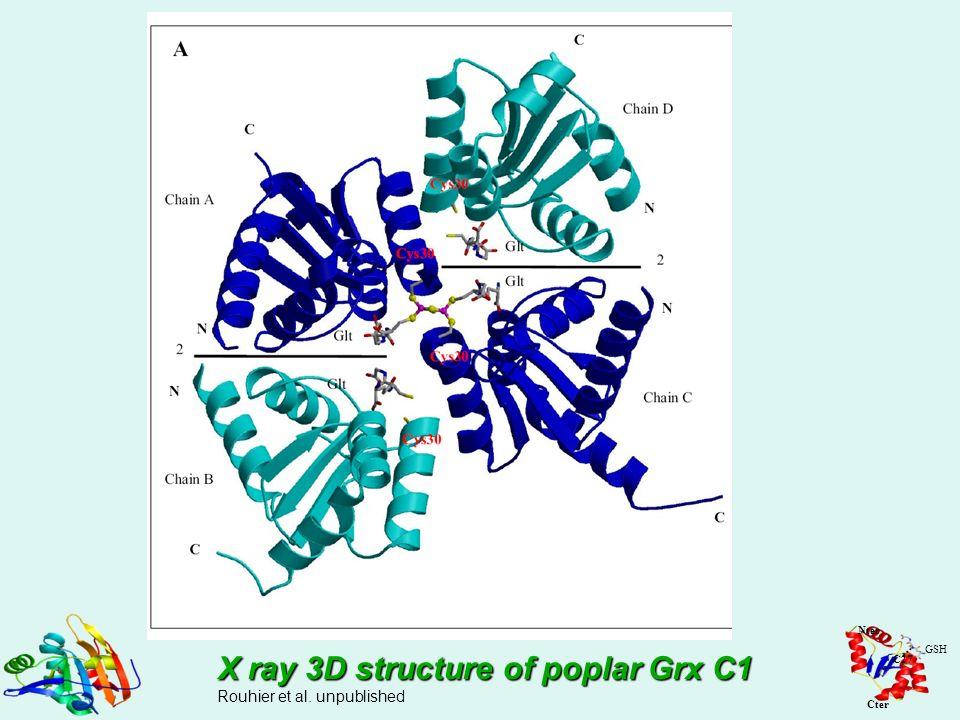 X ray 3D structure of poplar Grx C1 Rouhier et al. unpublished Nter Cter GSH C27